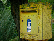 Vine Leaves Posters - French Mailbox Poster by Georgia Fowler