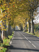 Road Marking Posters - French Tunnel Of Trees Poster by Carol Wood