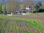 Merlot Photos - French Vineyard in the spring by Rod Jones