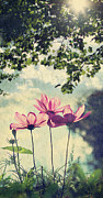 Wildflower Photography Prints - French Wild Flowers Print by Kelly Sillaste
