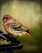 Bird-feeder Posters - Frequent Visitor Poster by Kathy Jennings