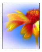Uplifted Prints - Fresh as a Daisy Print by Judi Bagwell