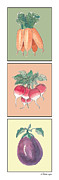Radish Prints - Fresh From The Garden Print by Arline Wagner