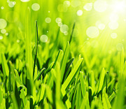 Grow Energy Posters - Fresh green grass abstract background Poster by Anna Omelchenko