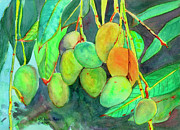 Mango Painting Posters - Fresh Mangos Poster by Michele Ross
