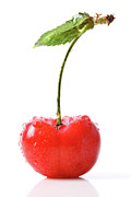 Wet Photo Framed Prints - Fresh red cherry isolated on white Framed Print by Sandra Cunningham