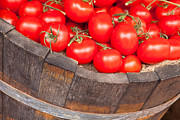 Tom Gowanlock - Fresh red tomatoes i...