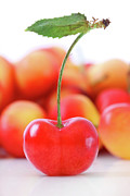 Drupe Framed Prints - Fresh ripe cherries isolated on white Framed Print by Sandra Cunningham