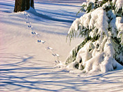 Christopher Arndt Metal Prints - Fresh Snow Prints Metal Print by Christopher Arndt