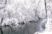 White River Scene Prints - Fresh Snowfall along the River Print by Thomas R Fletcher