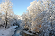 White River Scene Prints - Fresh Snowfall Gauley River Print by Thomas R Fletcher