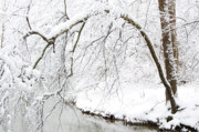 White River Scene Prints - Fresh Snowfall on the River Print by Thomas R Fletcher