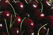 Bing Photos - Fresh Sweet Cherries With Stems by Taylor S. Kennedy