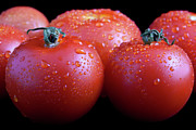 Droplets Posters - Fresh Tomatoes Poster by Gert Lavsen