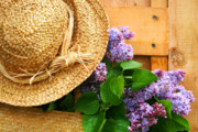 Sun Hat Digital Art Posters - Freshly picked lilacs Poster by Sandra Cunningham