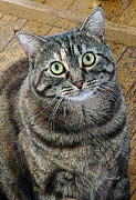 Feline Digital Art - Frieda Up Close by Suzanne Gaff