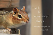 Cute Chipmunk Prints - Friend for Peanuts Print by Cathy  Beharriell
