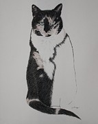 Spirit Cat Essence Drawings Posters - Friend II Poster by Patsy Sharpe