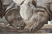 One Horned Rhino Photo Prints - Friend or Foe Print by Jason Waugh
