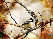 Textured Bird Posters - Friendly Carolina Chickadee Poster by J Larry Walker