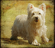 White Dogs Art - Friendly Smile by Lois Bryan