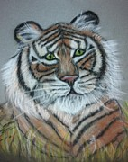 Friendly Pastels - Friendly Tiger Pastel Portrait by Hillary Rose