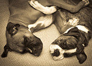 Brindle Photo Posters - Friendship Embrace Poster by DigiArt Diaries by Vicky Browning