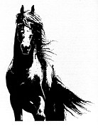 Wild Horses Drawings Framed Prints - Friesian Horse Framed Print by Kate Black
