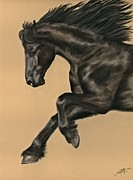 Sheri Gordon - Friesian Portrait