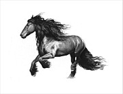 Friesian Prints - Friesian stallion Print by Artur Lobus