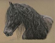 Equine Pastels Framed Prints - Friesian Stallion Framed Print by Terry Kirkland Cook