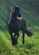 Horse Artwork Posters - Friesian Sun Poster by Fran J Scott