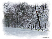 Snowed Trees Prints - Frigid Print by Brian Wallace