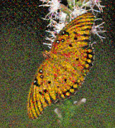 Imaging Photos - Fritillary Butterfly Mosaic by Scott Camazine