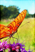 Fritillary On Ironweed Print by Judi Bagwell