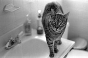 Cats Photos - Fritz The Cat Brooklyn NY 2003 by Julie VanDore
