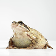 Full-length Framed Prints - Frog Framed Print by Darren Woolridge Photography - www.DarrenWoolridge.com