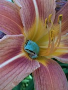 Day Lilly Prints - Frog in the Day Lilly Print by Jeremiah Colley