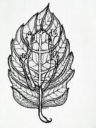 Frog On A Leaf Print by Nick Gustafson