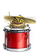 Drum Kit Prints - Frog Playing Drums Print by American Images Inc