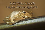 Brown Frog Framed Prints - Frog Prince Framed Print by Carolyn Marshall