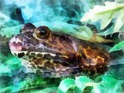 Bullfrogs Posters - Frog Ready To Be Kissed Poster by Susan Savad