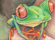 Red Eye Drawings - Frog by Tracy Fitzgerald