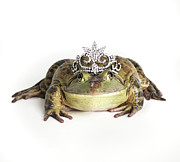 Tiara Framed Prints - Frog Wearing Tiara, Close-up Framed Print by American Images Inc
