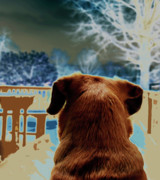 Dogs Digital Art Prints - From Her Perspective   Print by Steven  Digman
