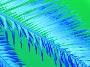 Electric Photo Originals - Frond Blue by Florene Welebny
