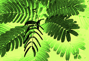 Plant Stretched Canvas Posters - Fronds Poster by Gerlinde Keating - Keating Associates Inc