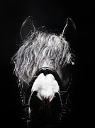 Sensory Perception Posters - Frontal Head Portrait Of Grey Horse Poster by Henrik Sorensen