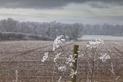 Snow-covered Landscape Art - Frost-covered Rural Field Cumbria by John Short
