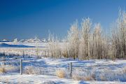 Snow Covered Fence Framed Prints - Frost-covered Trees In Snowy Field Framed Print by Michael Interisano